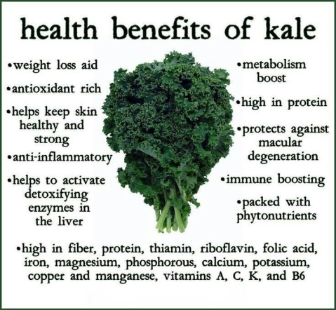 benefits of kale