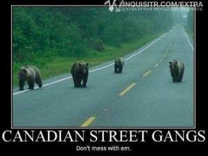 canadian street gangs