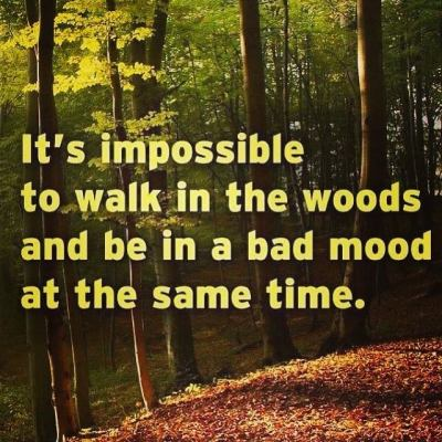 impossible walk in the woods